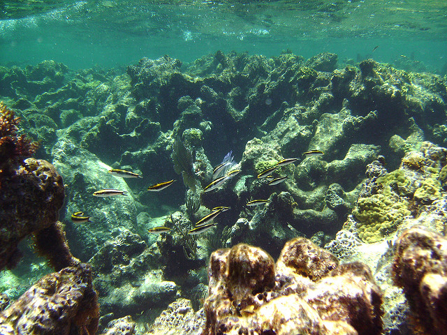 snorekeling dans les îles vierges britanniques caraïbes