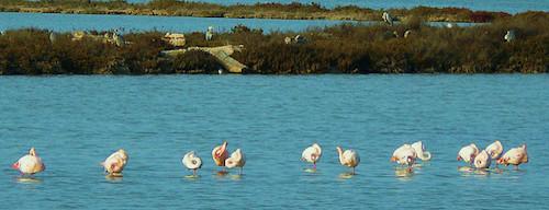 Parc Régional Naturel Molentargius-Saline