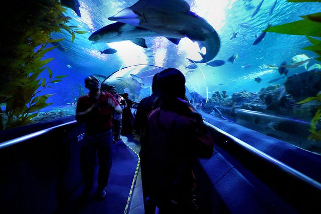 aquarium de Kuala Lumpur