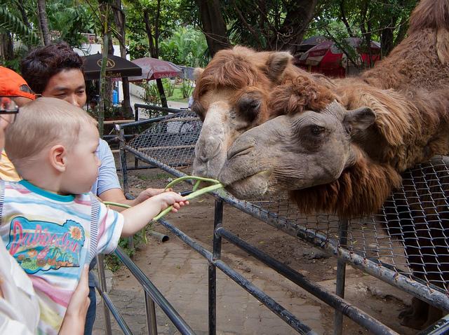 zoo de Bangkok