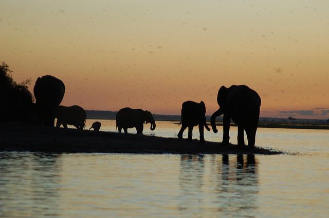rivière et parc national de Chobé